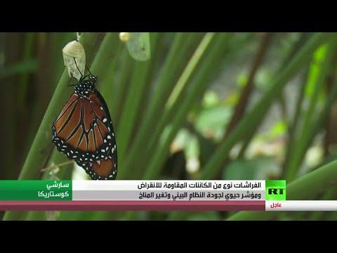 الفراشات مؤشر حيوي لجودة النظام البيئي وتغير المثناخ