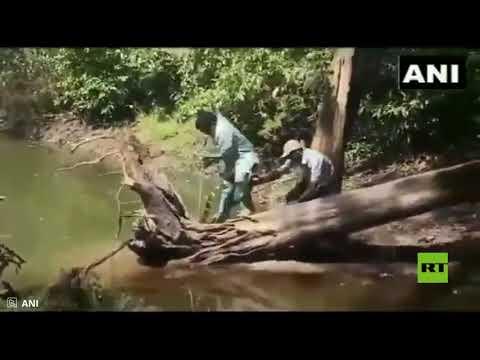 شاهدرجل هندي ينجو بأعجوبة من لدغة كوبرا