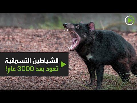 إطلاق حيوانات الشيطان للبر في محمية طبيعية خالية