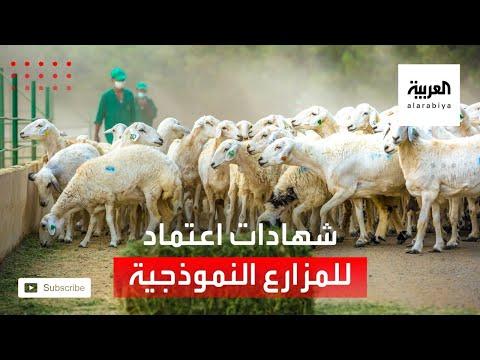 شاهد وزير البيئة والزراعة يسلم شهادات اعتماد سعودي قاب للمزارع النموذجية