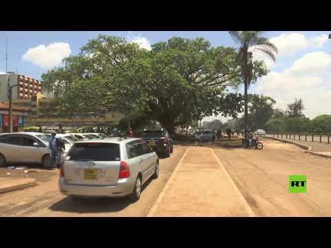 الرئيس الكيني يُصدر مرسومًا لإنقاذ شجرة تين عتيقة من القطع